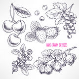 Set with different sketch berries Royalty Free Stock Photo