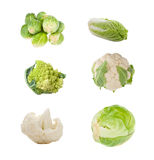 Set of different sorts of cabbage Stock Photography