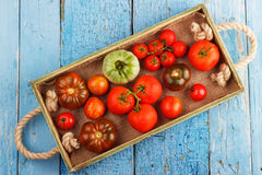 Set of different sorts of tomatoes Stock Photography