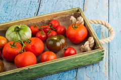 Set of different sorts of tomatoes Royalty Free Stock Photo