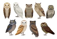 Flat vector set of different species of owls. Wild forest birds. Flying creatures. Elements for ornithology book vector illustration