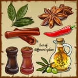 Set of different spices of the chef and foodie Stock Photo