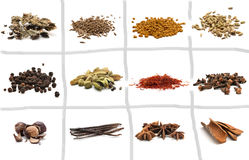 Set of different spices Stock Photography