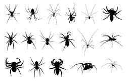 Set of different spiders. Isolated on white Royalty Free Stock Images