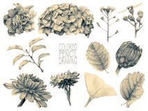 Set of different spring flowers and plants Stock Images