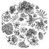 Set of different spring flowers and plants drawn by hand Stock Images
