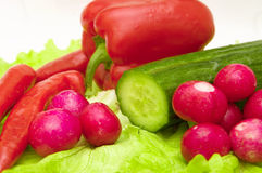 Set of different spring vegetables. Radish, cucumber, lettuce, peppers, greens royalty free stock image
