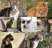 Set of photos of Israeli street cats royalty free stock photography