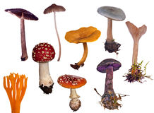 Set of different toadstools on white Royalty Free Stock Photography