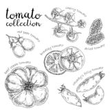 Set of different tomato. Hand drawn graphic. royalty free illustration