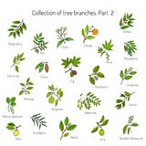 Set of different tree branches Royalty Free Stock Images