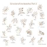 Set of different tree branches Royalty Free Stock Photo