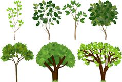 Set of different trees with green leaves. On white background Stock Image