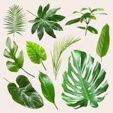 Set of different tropical leaves. On light background royalty free stock photo