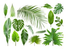 Set of different tropical leaves. On white background stock photos