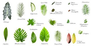 Set of different tropical leaves. On white background royalty free stock image