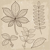 Set Of Different Type Leaves, Biology, Contour, Vintage Style. Leaves Of Grass. Leaves View. Royalty Free Stock Photography