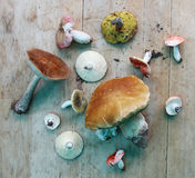Set of different type of mushrooms on wood worktop, top view Stock Photos