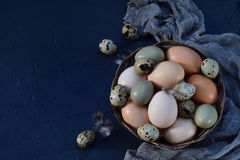 Set of different types birds eggs from chicken, pheasant and quail with feathers on a dark background. stock photo