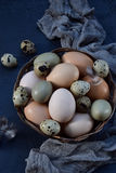 Set of different types birds eggs from chicken, pheasant and quail with feathers on a dark background. Stock Images