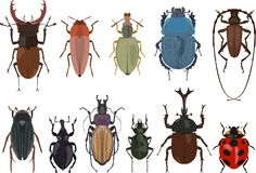 Set of different types of bugs and beetles isolated on white background in flat style. Vector illustration. Stock Images