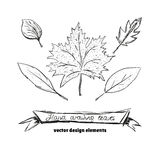 Set of different types of hand drawn autumn leaves. Vector illustration.  Royalty Free Stock Photo