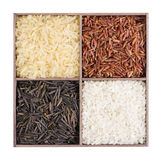 Set of different types of rice Royalty Free Stock Photos