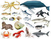 Set of different types of sea animals royalty free illustration