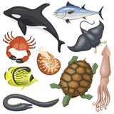 Set of different types of sea animals illustration tropical character wildlife marine aquatic fish Royalty Free Stock Images