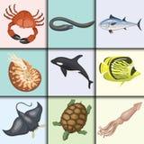 Set of different types of sea animals illustration tropical character wildlife marine aquatic fish Stock Photos