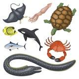 Set of different types of sea animals illustration tropical character wildlife marine aquatic fish Stock Photo