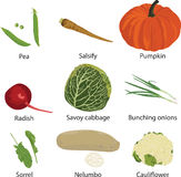Set of different vegetables Stock Photography