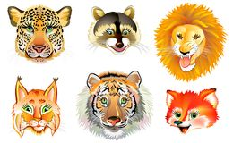 Set of different wild animals heads on white background. Stock Images