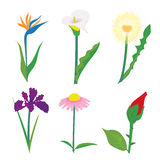 Set of different wildflowers, wheat ears and grass isolated on white. Royalty Free Stock Image