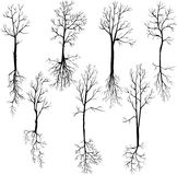 Set of different winter trees and roots Stock Photography