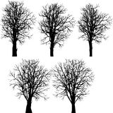 Set of different winter trees Royalty Free Stock Photo