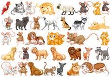 Set of differents pets. Illustration royalty free illustration