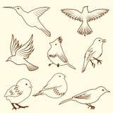 Set of differnet sketch bird stock photography