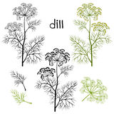 Set of dill  isolated on white background. Hand drawn  ill Royalty Free Stock Image