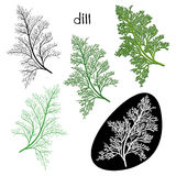 Set of dill  isolated on white background. Hand drawn  ill Royalty Free Stock Photos