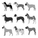 Set of dog breeds Royalty Free Stock Images