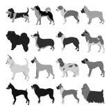 Set of dog breeds Royalty Free Stock Photo