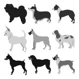 Set of dog breeds Stock Images