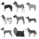 Set of dog breeds Stock Photography