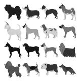 Set of dog breeds Royalty Free Stock Photography