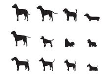 Set of  dog breeds silhouettes ,Vector illustrations. Stock Photos