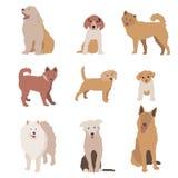 Set of dog character illustration. Dogs isolated on white. Royalty Free Stock Photo