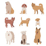 Set of dog character illustration. Dogs isolated on white. Vector Royalty Free Stock Photography