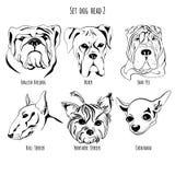 Set dog head. A set of contour drawing breed English Bulldog, Shar Pei, Boxer, Bull Terrier, Yorkshire Terrier, Chihuahua Stock Photos