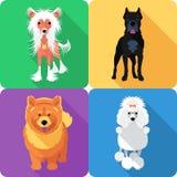 Set dog head icon flat design Stock Photos